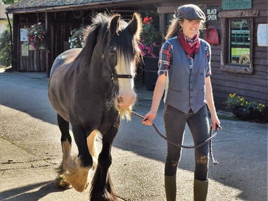 Dorset Heavy Horse Farm Park - Lambs