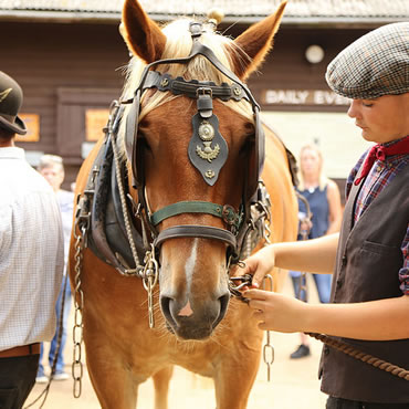 Dorset Heavy Horse Farm Park - Child feeding a horse