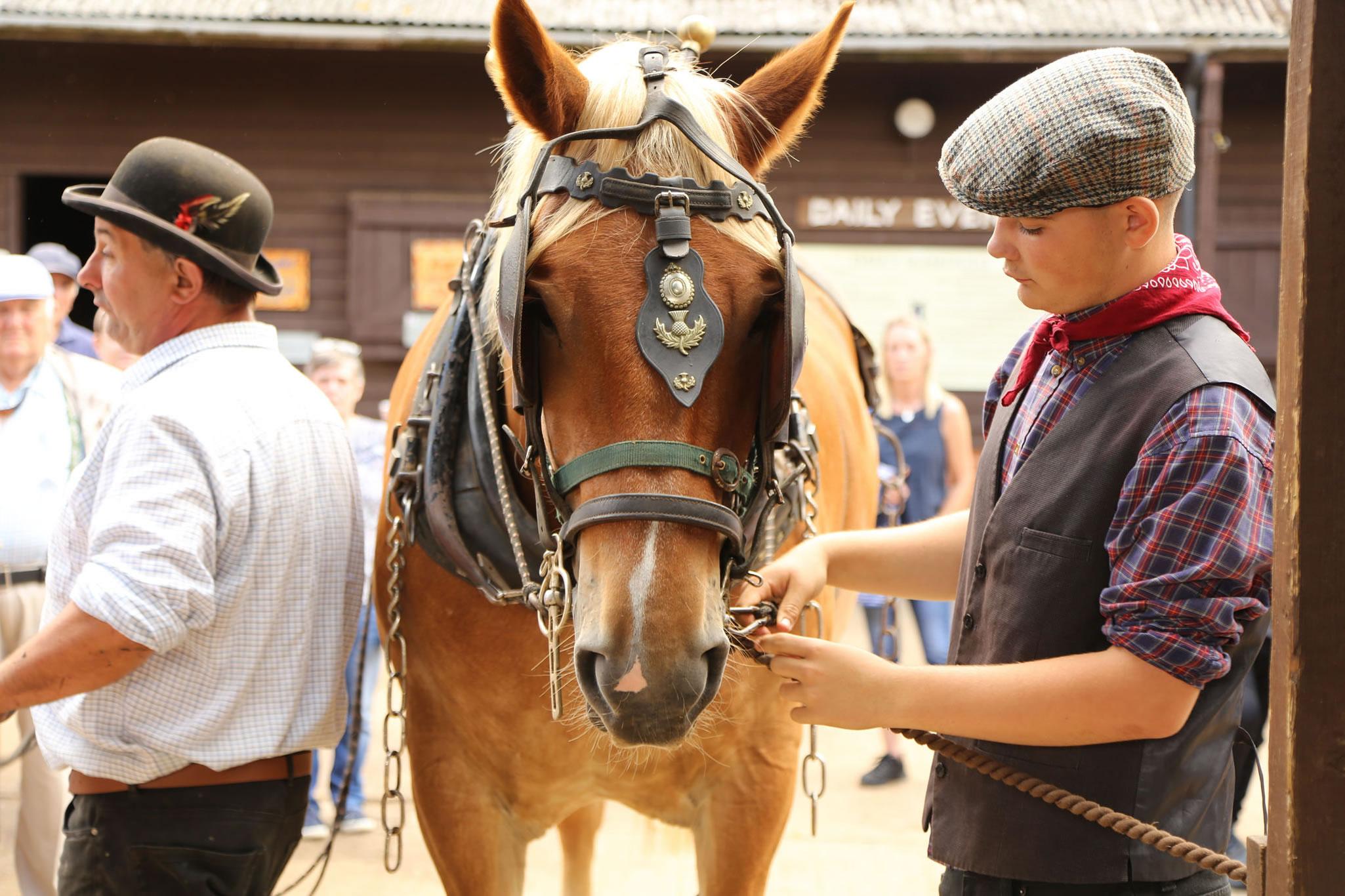 Dorset Heavy Horse Farm Park -