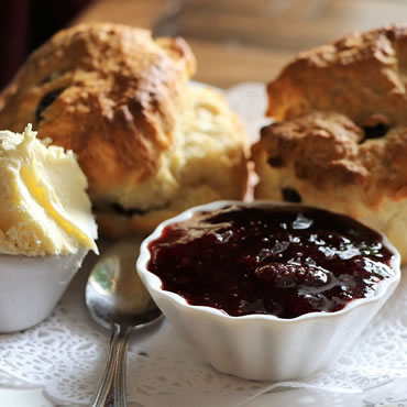 Dorset Heavy Horse Farm Park - Cream Teas