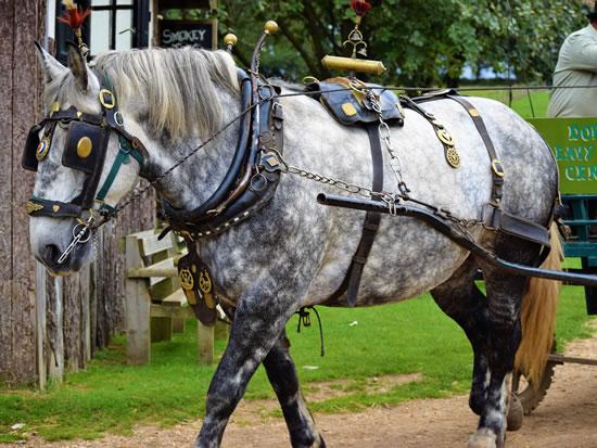 Dorset Heavy Horse Farm Park - Iona pulling a carriage