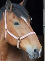 Dorset Heavy Horse Farm Park - Fred