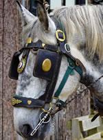 Dorset Heavy Horse Farm Park - Iona