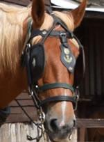 Dorset Heavy Horse Farm Park - Uno