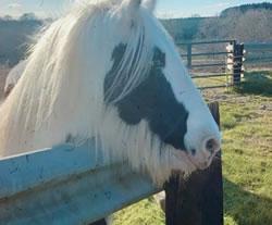 Dorset Heavy Horse Farm Park - Rascal