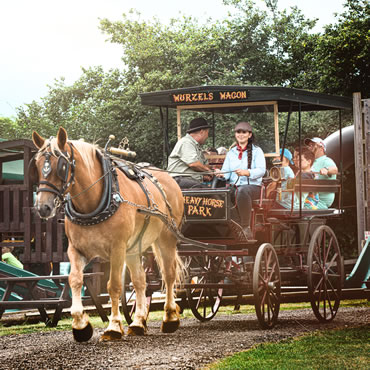 Dorset Heavy Horse Farm Park - Alpaca