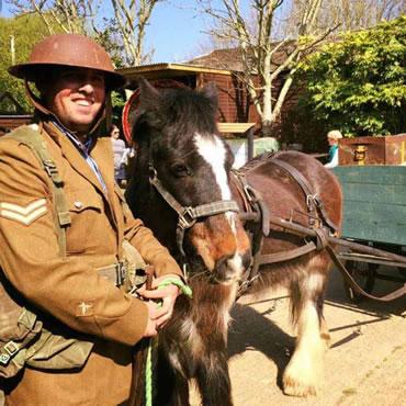 Dorset Heavy Horse Farm Park - War horses