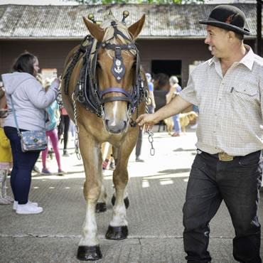 Dorset Heavy Horse Farm Park - Harness displays