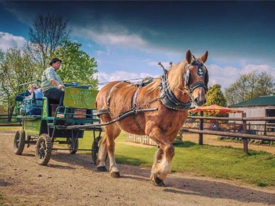 Dorset Heavy Horse Farm Park - Heavy Horses
