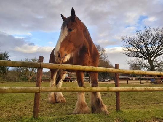 Dorset Heavy Horse Farm Park - Heavy Horse Heroes