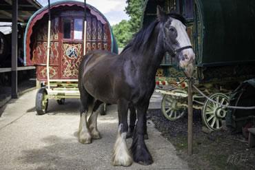 Dorset Heavy Horse Farm Park - Blacksmith's workshop